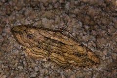 поле бабочки держало весну съемки макроса естественную Стоковые Фотографии RF