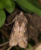поле бабочки держало весну съемки макроса естественную Стоковое фото RF