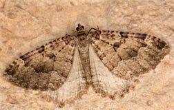 поле бабочки держало весну съемки макроса естественную Стоковое Фото