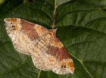 поле бабочки держало весну съемки макроса естественную Стоковые Изображения