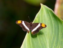 поле бабочки держало весну съемки макроса естественную Стоковые Фото