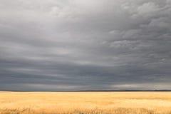 поле бурное Стоковые Фотографии RF