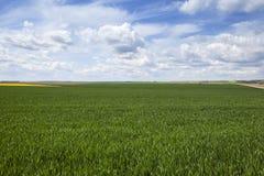 Поле весной стоковое фото rf