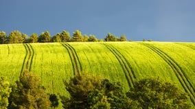 Поле весны с деревьями Стоковое фото RF