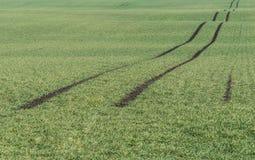 Поле весны с пазами Стоковые Фото