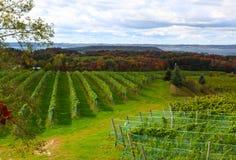 Поле виноградника Стоковое фото RF