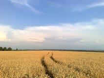 Поле выходит к небу Стоковое фото RF