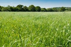 Поле в английской сельской местности Стоковая Фотография