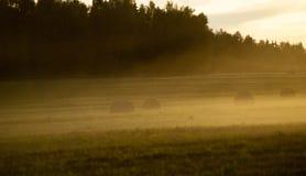 Поле в заходе солнца Стоковые Изображения RF