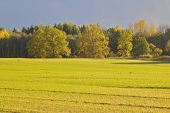 Поле в осени Стоковое Фото