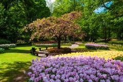 Поле в садах Keukenhof, Lisse тюльпана, Нидерланды Стоковое Фото