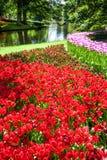 Поле в садах Keukenhof, Lisse тюльпана, Нидерланды Стоковые Фото