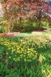 Поле в садах Keukenhof, Lisse тюльпана, Нидерланды Стоковые Изображения