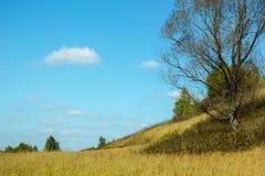 Поле в солнечной погоде в осени Стоковая Фотография
