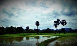 Поле в Таиланде Стоковое фото RF