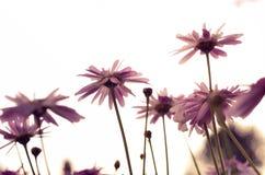 Поле в цветени Стоковое Фото