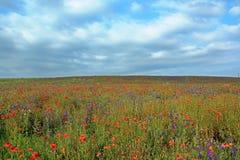 Поле в цветках стоковое фото rf