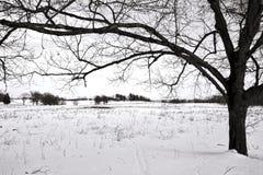 Поле дерева и снега на национальном парке кузницы долины Стоковые Фото