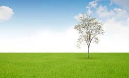 Поле дерева и травы Стоковое Фото