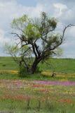 Поле дерева обозревая wildflowers Стоковое Изображение RF