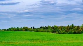 Поле лесом около Праги Стоковое Фото