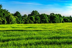 Поле лесом около Праги Стоковые Изображения RF