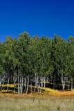 Поле, лес и небо Стоковое Изображение RF