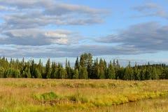 Поле, лес, облака Стоковое Изображение