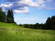 Поле лета в Финляндии Стоковые Фотографии RF