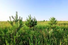 Поле лета травы Стоковое Изображение RF