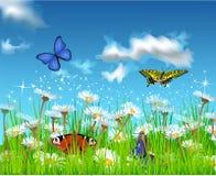 Поле лета Стоковые Изображения