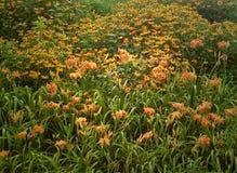 Поле желтых цветков Стоковые Изображения