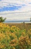 Поле желтых Goldenrod и озера Стоковые Фотографии RF