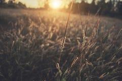Поле & заход солнца травы Стоковое фото RF