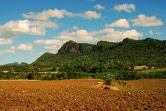 поле земледелия Стоковое Изображение