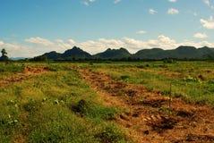 поле земледелия Стоковая Фотография RF