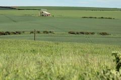 Поле зерна Стоковое Изображение RF