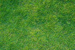 Поле зеленого цвета предпосылки футбольного поля Greensward Стоковое Изображение