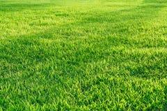 Поле зеленой травы в свете утра Стоковые Фотографии RF