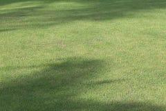 Поле зеленой травы играть спорта Стоковые Фото
