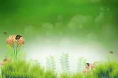 Поле зеленой травы и насекомое бабочки на цветке Стоковая Фотография RF