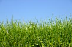 Поле зеленой травы и яркое небо Стоковая Фотография