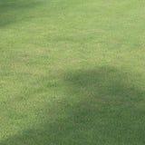 Поле зеленой травы поля для гольфа Стоковое Изображение RF