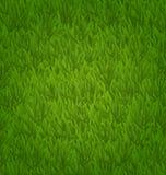 Поле зеленой травы, текстура травы Стоковое Изображение