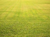 Поле зеленой травы Стоковое фото RF