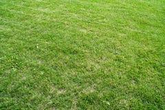 Поле зеленой травы Стоковые Изображения RF