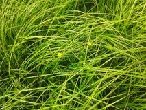 Поле зеленой травы Стоковые Изображения
