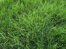 Поле зеленой травы Стоковые Фотографии RF