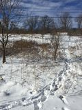 Поле зим Стоковое Изображение