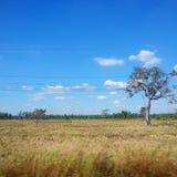 поле золотистое Стоковое Фото